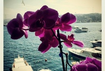 Istanbulove
