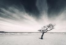 Five Elements / by CHUCHU NY