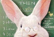 Rabbit for ever 2....bunny...coniglietti