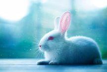 Hayvanlar/Animals