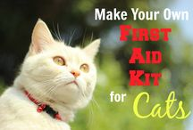 Safety for Cats