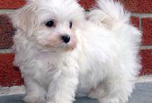 #puppy#pocket