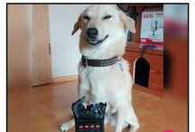 el.perro chistoso