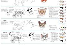 Cat genetics and stuff