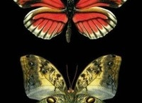Butterflies, Dragonflies and other Magical Creatures / by Arell Olson