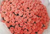 Online Flowers Gift - Send Flower To Mumbai / Want to send flower and cake to Mumbai ? you are on right place. http://onlineflowersgift.com/send-flowers/mumbai