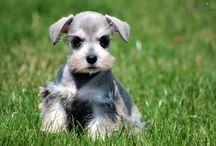 psie fryzury