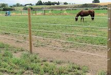 Diamond Mesh / The Safest and Strongest fencing for horses are used and recommended by the world's leading thoroughbred farms to be used when horse safety is of the utmost importance. We are providing best fencing for horses in Australia, New Zealand and in Asia. http://www.diamondmesh.com.au/