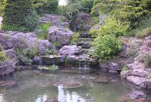 Garden Pond & Wild Garden