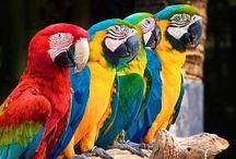 papağanlarrr