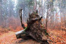 Stromy a pařezy / Fotografie živých stromů, pařezů a uměleckých děl z kmenů