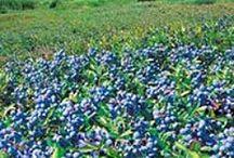 Rare fruit plants