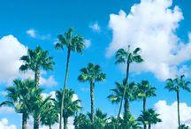 Coronado Island Paradise