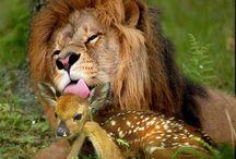 Dunia Binatang