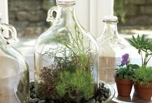 Pot plants terrariums
