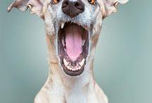 Dog - Portrait