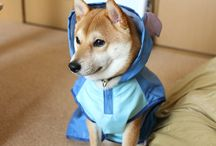 My Dog Gonta / It's cute!