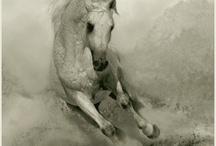 Ashvamedha / Vedic Horse Sacrifice