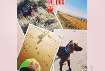 Yoep - German Longhair Pointer / My dog