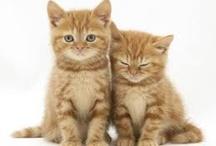Orange kittens / by Lilyann Bridwell