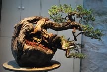 Bonsai / by Ines Schmook