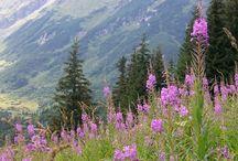 Góry / przyroda