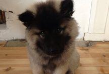 LURE / My best dog
