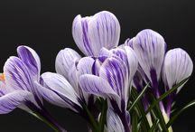 Мы собрали список весенних чудес Украины, которые обязательно нужно увидеть весной