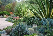 jardin succulentes
