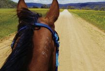 Horse World / Everything about horses How I donate to horse charities Read my horse adventure story