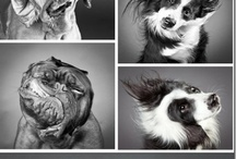 Animals / by Cheri Howell