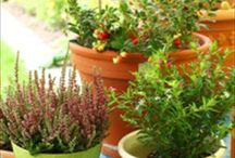Plants and Herbs