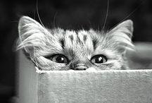 Kitty >.<