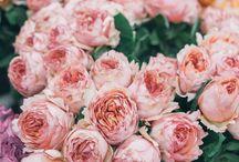 》Flowers《