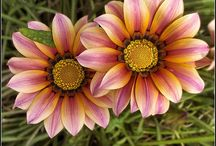 flowers / by Barbara Carola