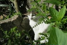 Mina a gatinha mais linda