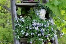 Greenhouses & outdoor decor