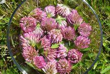 Flower essences