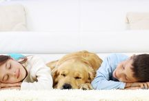 """Carpet Cleaning Newport Beach / Clean carpet makes your house feel fresh!  Unfortunately, gravity is our carpets worst enemy!  Carpet acts as the """"catch-all"""" for dust and dander, pet hair, food and spills.  You name it, whatever pollutants we carry into our homes eventually settle down into our carpet fibers."""