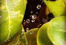 Waterdrop in plant
