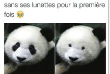 lauuul