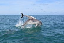 West Wales wildlife / The wildlife of West Wales and the offshore islands