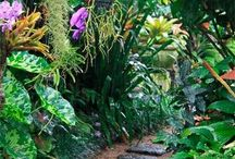 Tropical gardens/ flowers / by Sylvie Sylvester-warrell