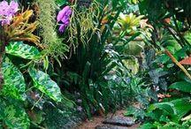 Buderim Gardens