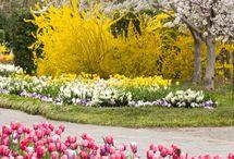 Horky front garden spring