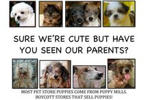 The Truth About Pet Stores / The puppy mill and pet store connection create a continual demand for puppy mill puppies, but the bitter reality and truths are often hidden.  Learn the facts.