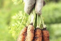 Garden tips / by Kari Schallock