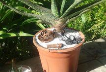 Decoraciones Cactus / Arreglos con cactus y suculentas