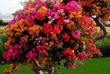 növények, természet