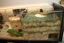 Gerbil cage ideas